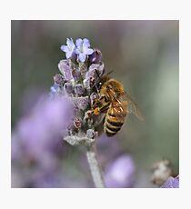Bee January 2011 Photographic Print