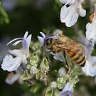 Bee May 2011 by saharabelle