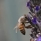 Bee July 2011 by saharabelle