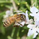 Bee Aug 2011 by saharabelle
