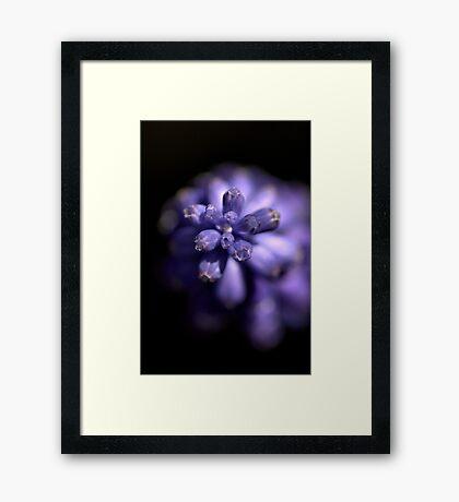 Blues in the shade - Mascari Bulb Framed Print