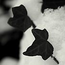 Ivy leaves in the snow by AbsintheFairy