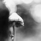 The Ballerina by Rory Garforth