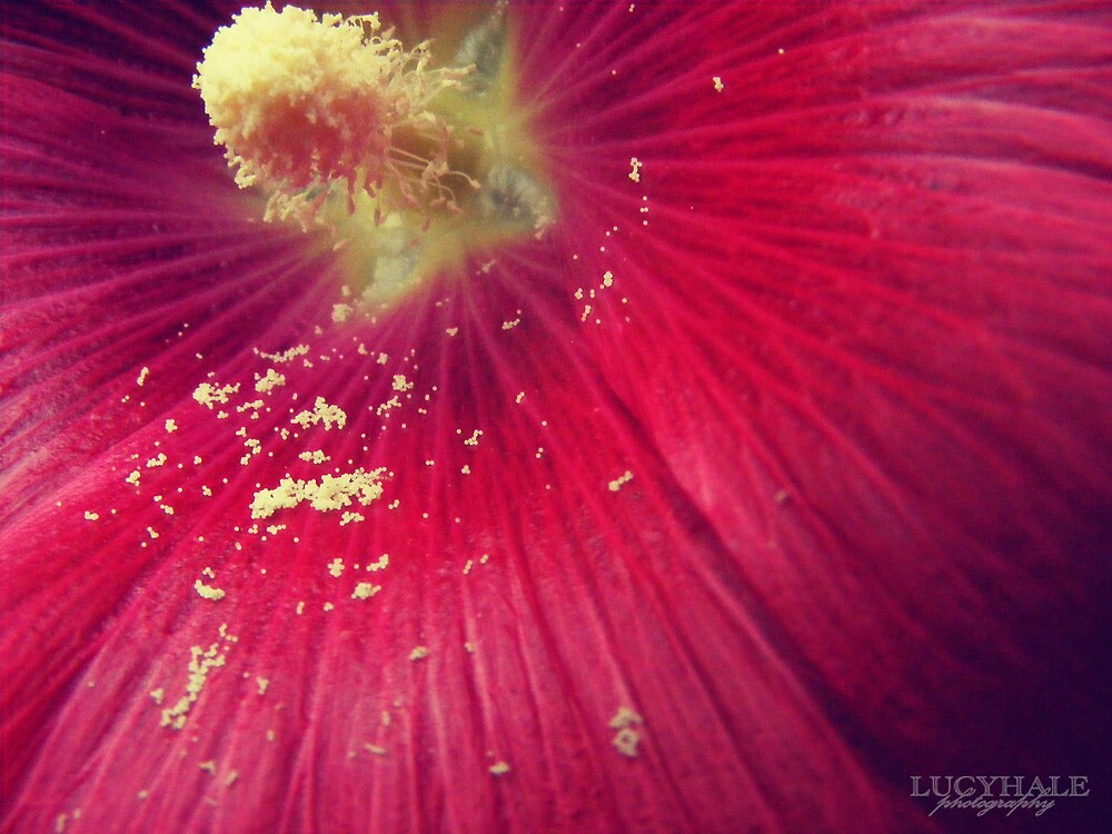 Scattering of Pollen by Lucy Hale
