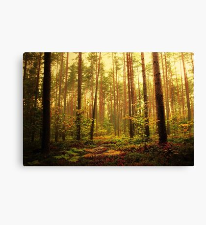 Touch of Autumn Canvas Print