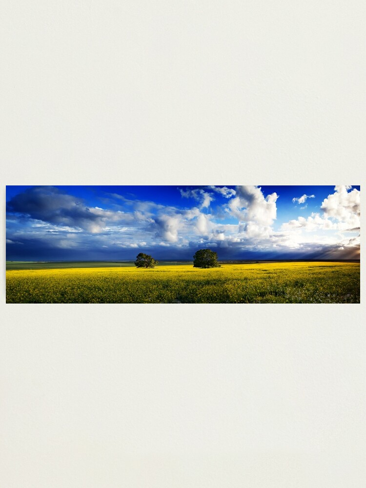 Alternate view of Canola Hill Photographic Print