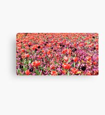 Flowers at Floriade Canvas Print