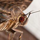 Moth by Daniel Spruce