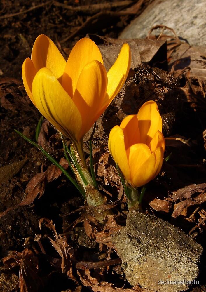 first of spring! by dedmanshootn