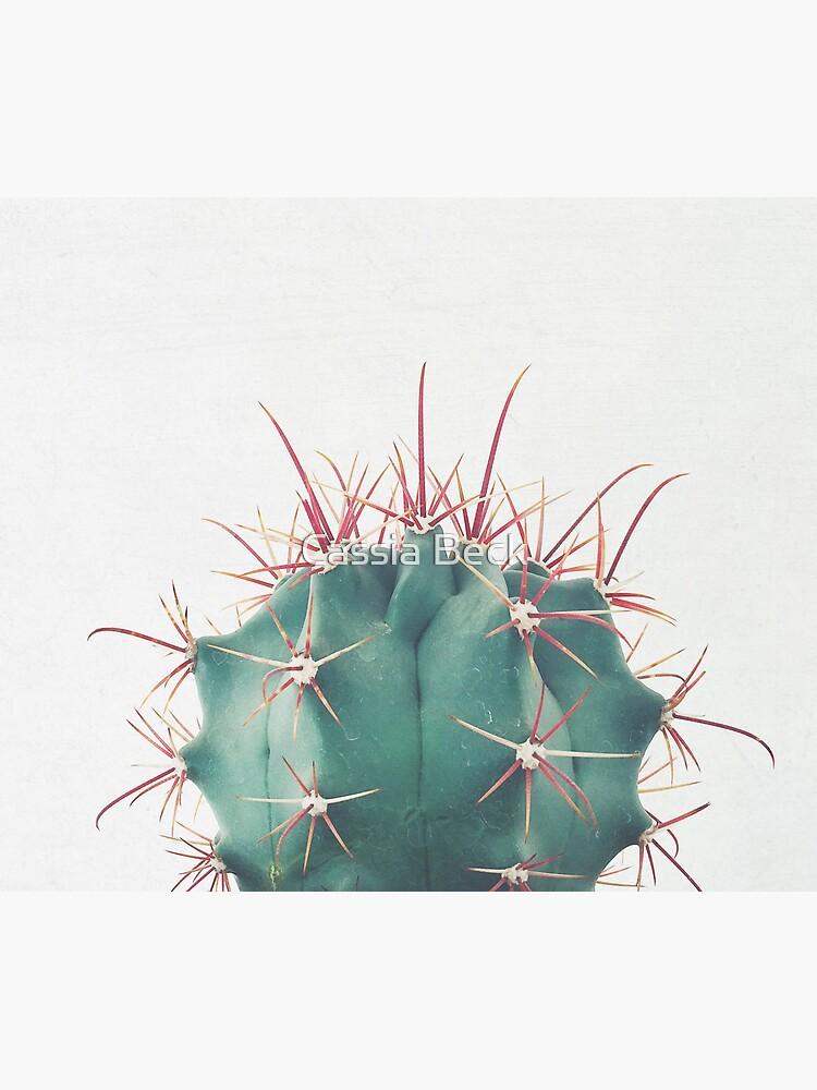 Ferocactus by Cassia