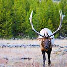 all horns  by evvy84