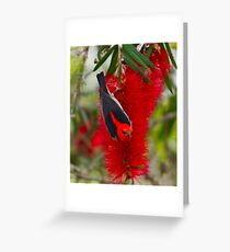 SC ~ HONEYEATER ~ Scarlet Honeyeater by David Irwin ~ WO Greeting Card