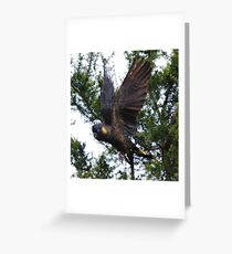 PARROT ~ Yellow-tailed Black Cockatoo by David Irwin ~ WO Greeting Card