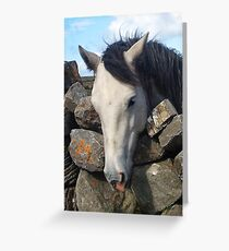 Connemara Pony looking over a stone wall Greeting Card