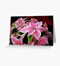 Pink Poinsettias Greeting Card