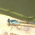 Dragon Blue by Beau Williams