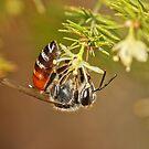 "You will ""Bee"" rewarded ! by Bharat Varma"