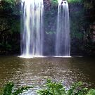 Dangar Falls, Dorrigo by Michael John