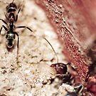 The Ants by Michael Walker