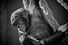 Baby Chimp by Extraordinary Light