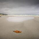 Denison Beach, Bicheno, Tasmania by James Nielsen