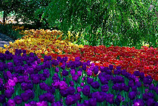 Color Explosion at the Cincinnati Zoo by Tom Aguero