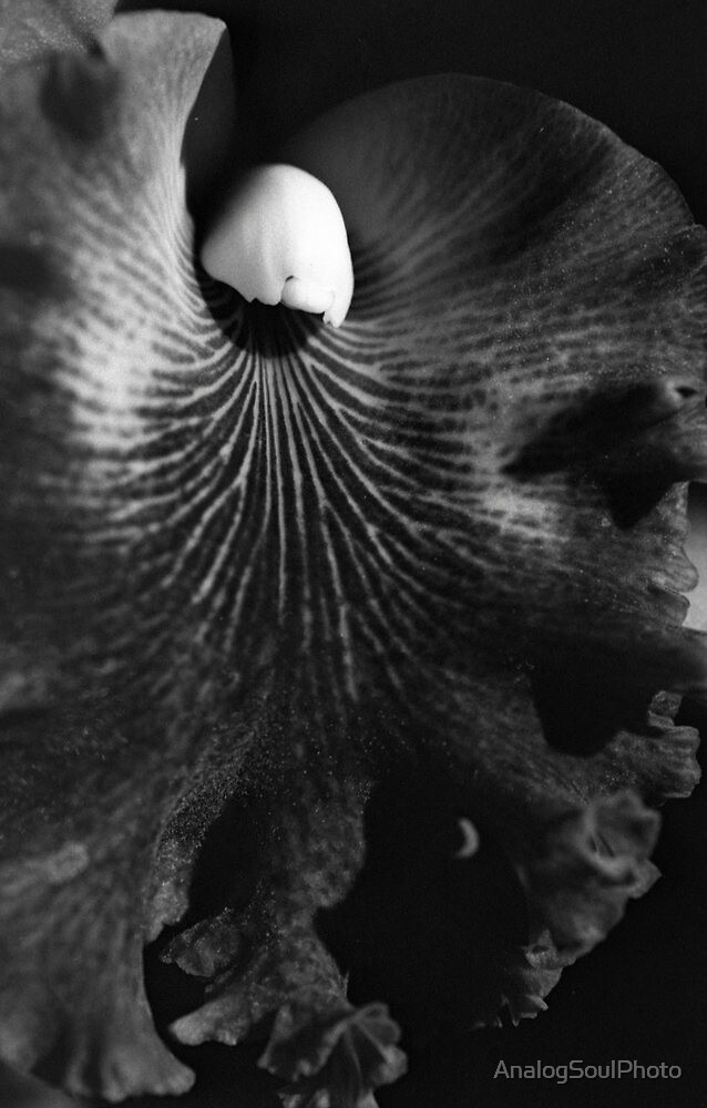Velvet by AnalogSoulPhoto