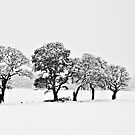 Snowy Grove by Tom Gomez
