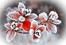 Winter Garden  by Selina Ryles