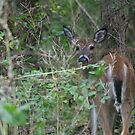 Peek-a-boo! by Jen Hendricks