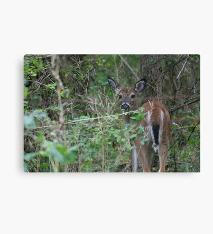 Peek-a-boo! Canvas Print