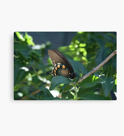 Ready for flight Canvas Print