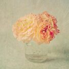 Textured Peach Roses  by Nicola  Pearson