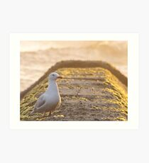Sea-Gull Art Print