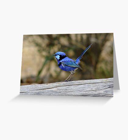 Blue Wren take 2 Greeting Card