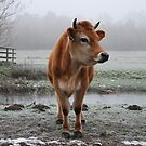 Jersey cow 2 by purpleminx