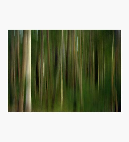 Lost in a Forest Photographic Print