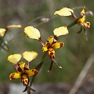 Wildflowers of the Bendigo Region by Jay Armstrong