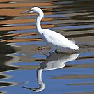 Snowy egret reflected in water by Anthony Goldman