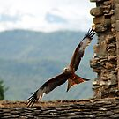 REd Kite in Ainsa! by martincanale