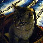 a tisket,a tasket,there is a kitty in my basket by califpoppy1621