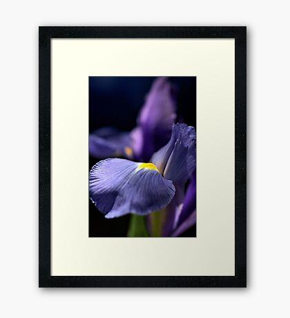 Iris Glow Framed Print