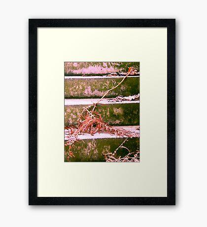 Fern on the Stair Framed Print