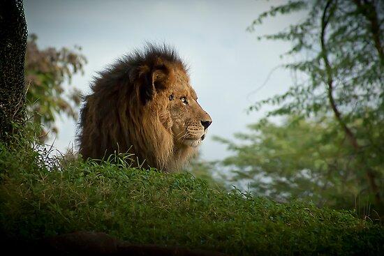 King by Paul Louis Villani