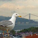 Seagull and Bosphorus Bridge, Istanbul by Zoe Marlowe