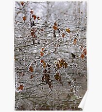 Forest trees blanketed with frost  Poster