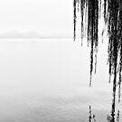 Mountains, water and willows - Hangzhou, China by Norman Repacholi