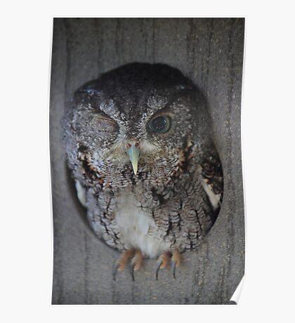 Wink (Screech Owl) Poster