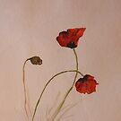 red Poppies by Birgit Schnapp