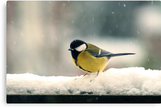 Little tit in snowstorm by Tarolino